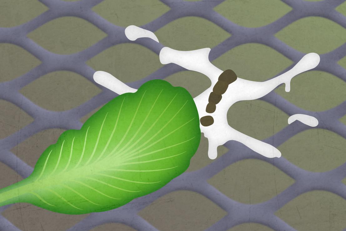 Illustration of lettuce leaf next to bird excrement