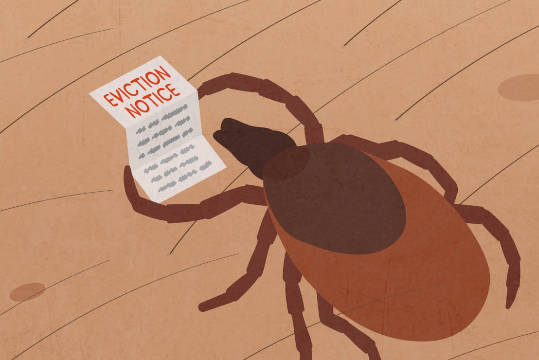 Illustration of a tick holding and eviction notice